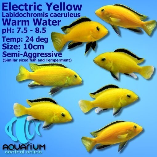 Electric Yellow