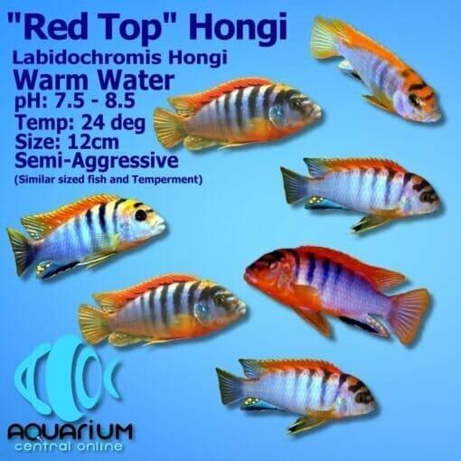 Red Top Hongi